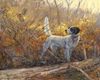 """<font size=""""2"""" font color=""""red"""">NEW</font> English Setter and woodcock: Parlor Tricks � giclee"""