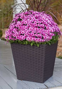 Wicker Pacific Plant Container