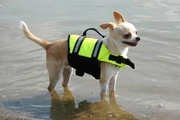 Paws Aboard Yellow Doggie Life Jacket