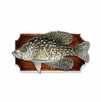 Marvelous Gray Crappie Fish Wall Art