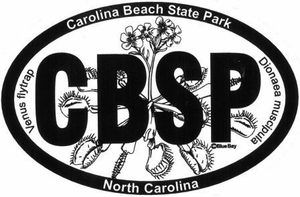 "Carolina Beach Bumper Sticker  4"" x 6"""