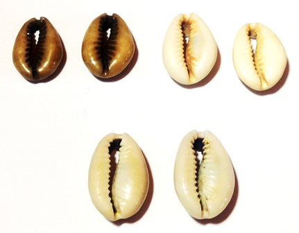 cowrie shell hair jewelry pairs three different types