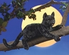 Folkmanis Puppet <br>Black Cat