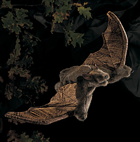 Folkmanis Puppet <br>Brown Bat