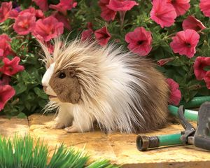 Folkmanis Puppet <br>Guinea Pig