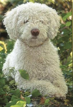 Ravensburger 100 Piece <br>Spanish Water Dog