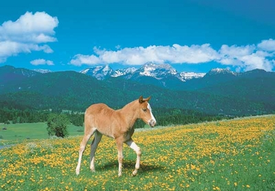 Ravensburger 500 Piece <br>Foal on Pasture