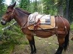 Formfitter Pack Saddle for Sale
