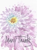Burst of Thanks Greeting Card, set of 6 blank notes