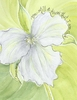 Trillium Sympathy Greeting Card, message inside
