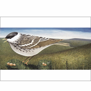 Blackpoll Warbler, 6 Notecards and Envelopes