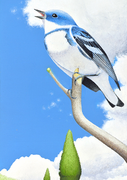 Cerulean Warbler, 6 Notecards and Envelopes
