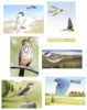 Song Birds, 6 Notecards and Envelopes