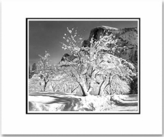 """ANSEL ADAMS - HALF DOME, APPLE ORCHARD, WINTER, YOSEMITE   Large Ansel Adams Matted Reproduction (16"""" x 20"""")"""