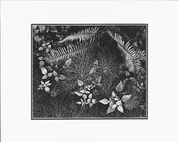 "LEAVES, MILLS COLLEGE, OAKLAND, CALIFORNIA   Large Ansel Adams Matted Reproduction (16"" x 20"")"