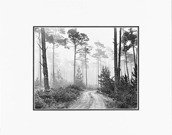 """ANSEL ADAMS - ROAD AND FOG, DEL MONTE FOREST, PEBBLE BEACH, CALIFORNIA   Large Ansel Adams Matted Reproduction (16"""" x 20"""")"""