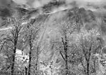 """ANSEL ADAMS - TREES AND CLIFFS OF EAGLE PEAK, YOSEMITE NAT'L PARK, CA  Large Ansel Adams Matted Reproduction (16"""" x 20)"""