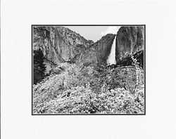 "YOSEMITE FALLS AND APPLE BLOSSOMS, YOSEMITE NAT'L PARK  Large Ansel Adams Matted Reproduction  (16"" x 20"")"