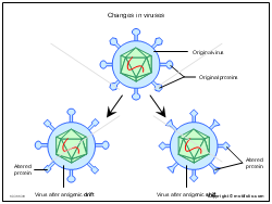 Changes in viruses