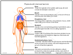 Physical and chemical barriers