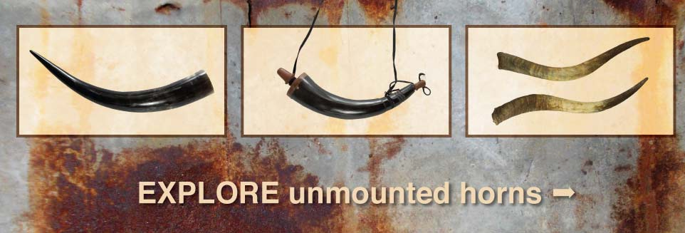 Mp kd horn and leather shop online mounted longhorn steer horns make excellent gifts sciox Choice Image