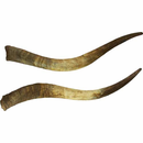 Pair of Raw Unmounted Horns - Natural