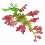 Leafy Sea Dragon Decor, Green - SM.