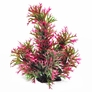 Staghorn Style Green & Pink Plant 18""