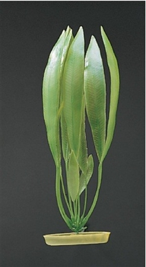 Amazon Sword Plant, From Hagen