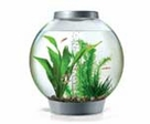 Aquarium Plants Care