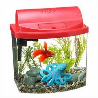 Aqueon Mini Bow 2 1 2 Desktop Aquarium Kit At