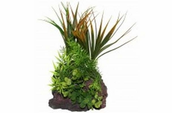 North American Pet RockGarden Lava Base rock w 12in asst plant
