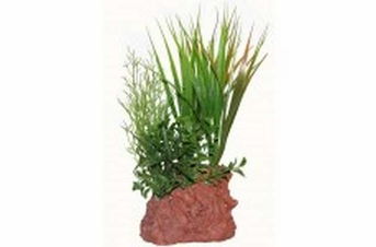 North American Pet RockGarden Lava Base rock w 8in asst plant