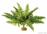 Exo Terra Boston Fern Terrarium Plant, Medium, From Exo Terra