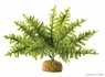 Exo Terra Boston Fern Terrarium Plant, Small, From Exo Terra
