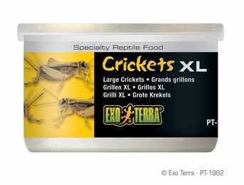 Exo Terra Crickets, Large Size, 1.2 oz, From Exo Terra