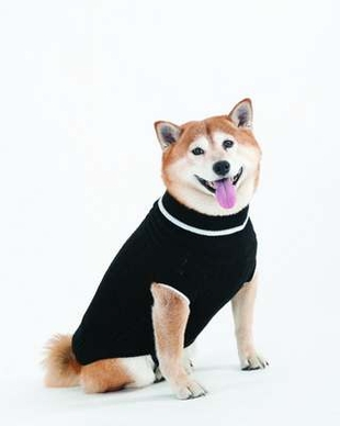 Fashion Pet Lookin Good Classic Cable Sweater for Dogs, X-Large, Black