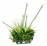 Fluval Chi Boxwood and Tall Grass Ornament, From Hagen