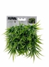 Fluval Chi Grass Ornament, From Hagen