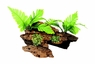 Marina Naturals Malaysian Driftwood w/Plants, Medium, From Hagen