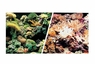 "Marina Saltwater, 12""x 25' Aquarium Background, Marine Reef/Coral , From Hagen"