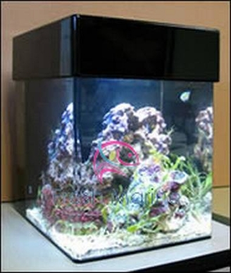 Nano Tank with Canopy and Built-In Lighting