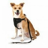 Petmate 11475 The Ultimate Travel Harness for Pets, X-Small, Black