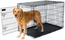Petmate 19-Inch 2-Door Training Retreats Wire Kennel for Dogs Upto 15-Pound