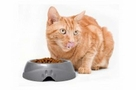 Petmate Ultra Lightweight Dish With Microban Assorted 1cup