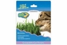 Our Pet Cosmic Kitty Cat Grass
