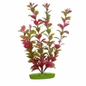 Red Ludwigia, From Hagen