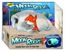 Underwater Galleries Moon Rock with individual PVC Display Box