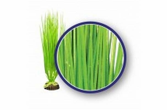 Weco Freshwater Series Asian Hairgrass 9in
