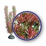 Weco Freshwater Series Red Foxtail 9in